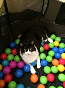 Alice in her ball pit